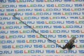 Петля HP Compaq G62 CQ62 CQ56 Левая FBAX6016010 FBAX6001010